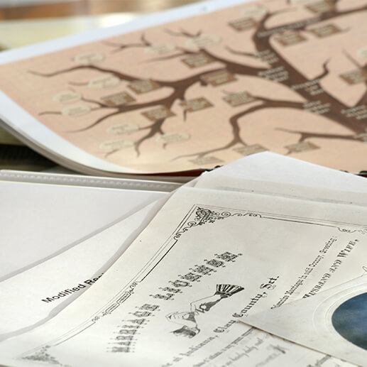 Trace your family tree