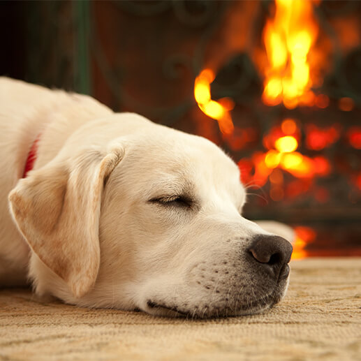 Firework safety for dogs Q&A