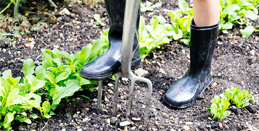 Grow your own & gardening